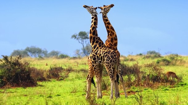 What-to-expect-on-a-Safari